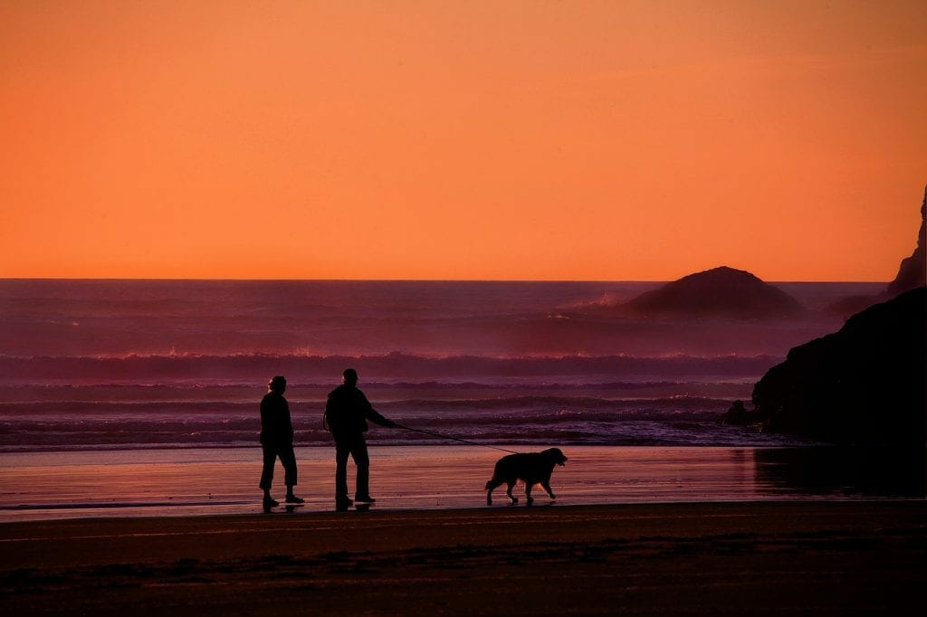 Couple in retirement walking a dog
