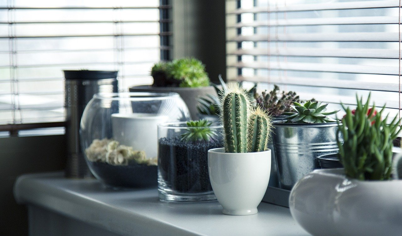 A fresh window arrangement with decor changes freshly applied