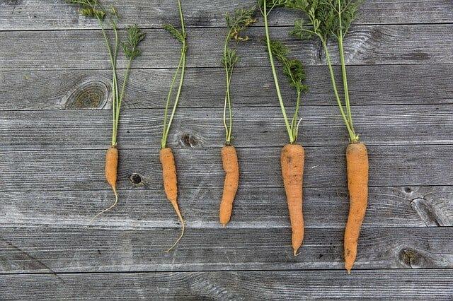 Carrots, Grow Indoor Vegetables